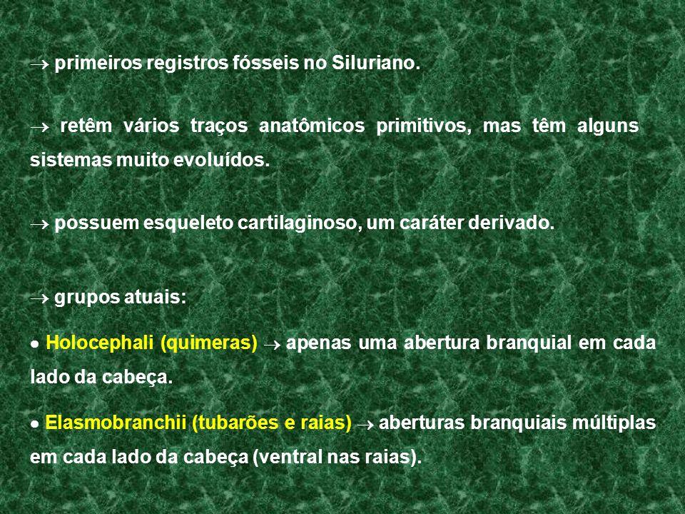  primeiros registros fósseis no Siluriano.