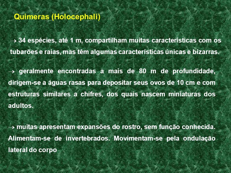 Quimeras (Holocephali)