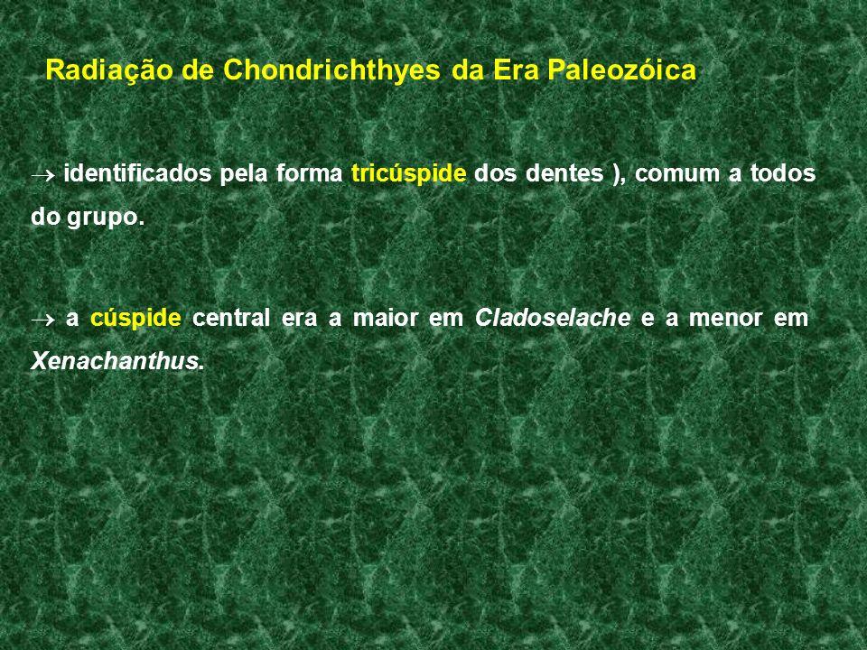 Radiação de Chondrichthyes da Era Paleozóica