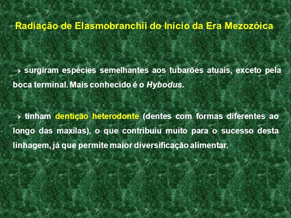 Radiação de Elasmobranchii do Início da Era Mezozóica