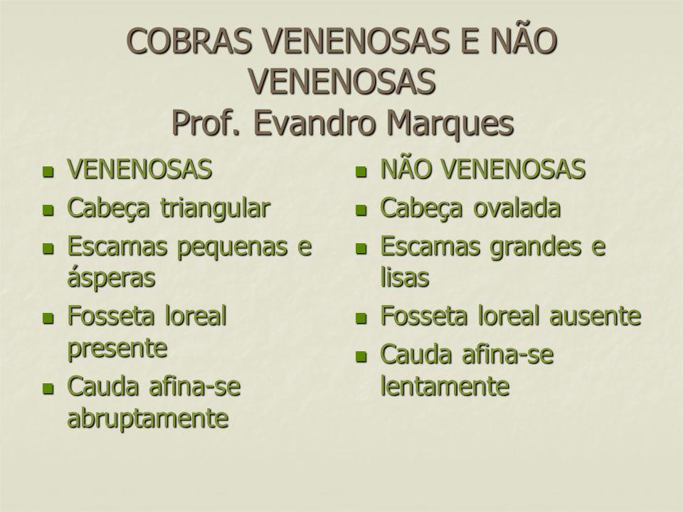 COBRAS VENENOSAS E NÃO VENENOSAS Prof. Evandro Marques