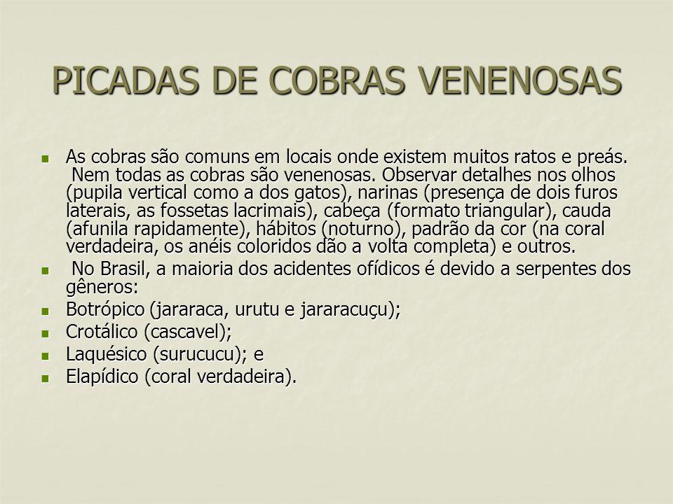 PICADAS DE COBRAS VENENOSAS