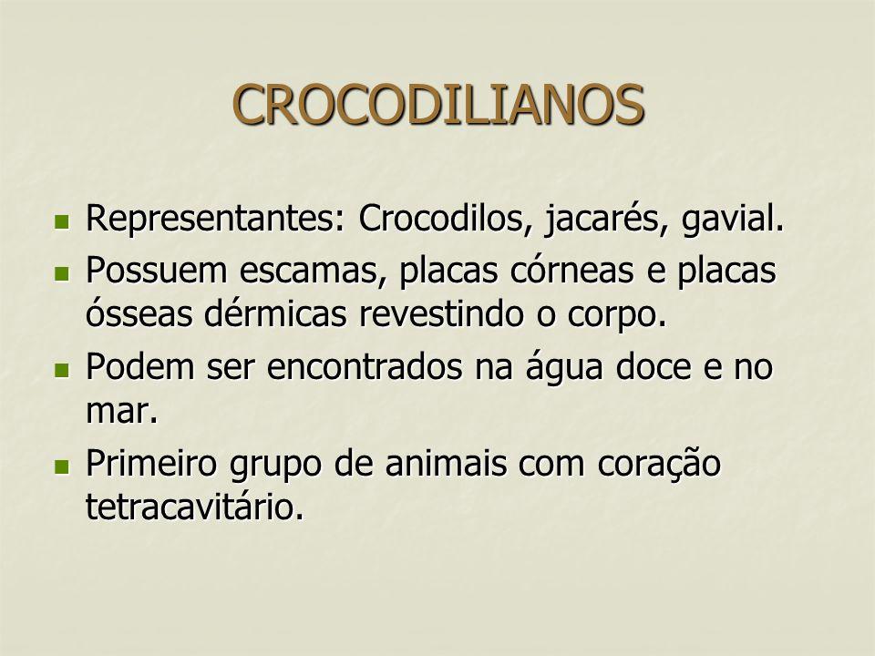 CROCODILIANOS Representantes: Crocodilos, jacarés, gavial.