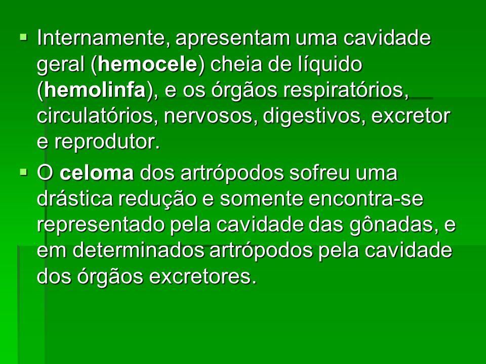 Internamente, apresentam uma cavidade geral (hemocele) cheia de líquido (hemolinfa), e os órgãos respiratórios, circulatórios, nervosos, digestivos, excretor e reprodutor.