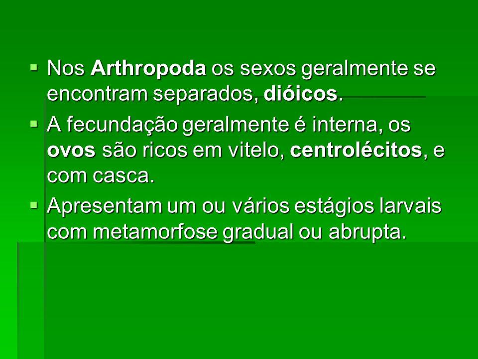Nos Arthropoda os sexos geralmente se encontram separados, dióicos.