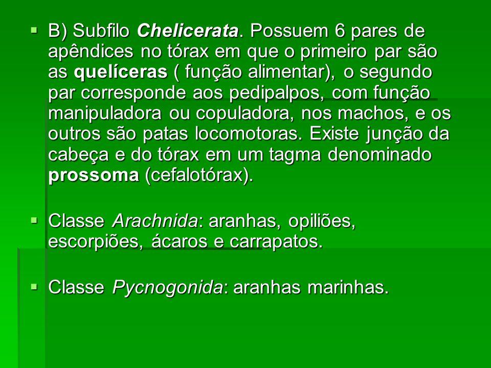 B) Subfilo Chelicerata