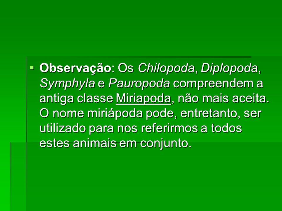 Observação: Os Chilopoda, Diplopoda, Symphyla e Pauropoda compreendem a antiga classe Miriapoda, não mais aceita.