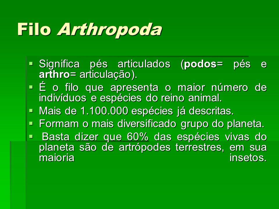 Filo Arthropoda Significa pés articulados (podos= pés e arthro= articulação).