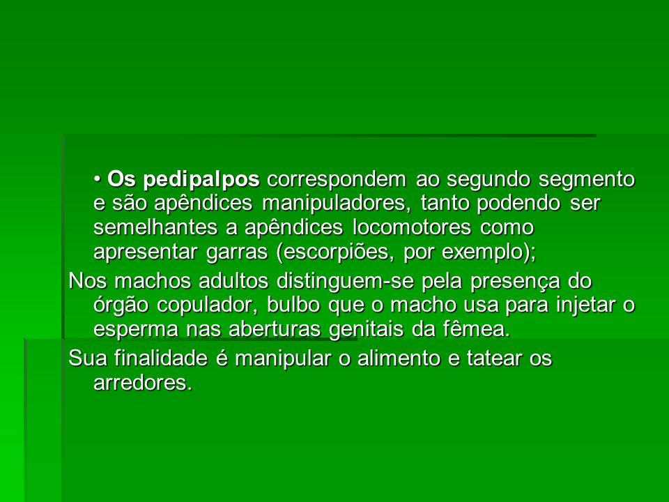 • Os pedipalpos correspondem ao segundo segmento e são apêndices manipuladores, tanto podendo ser semelhantes a apêndices locomotores como apresentar garras (escorpiões, por exemplo);