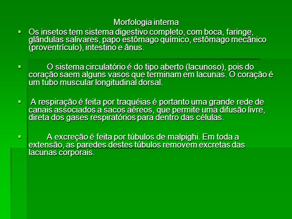 Morfologia interna