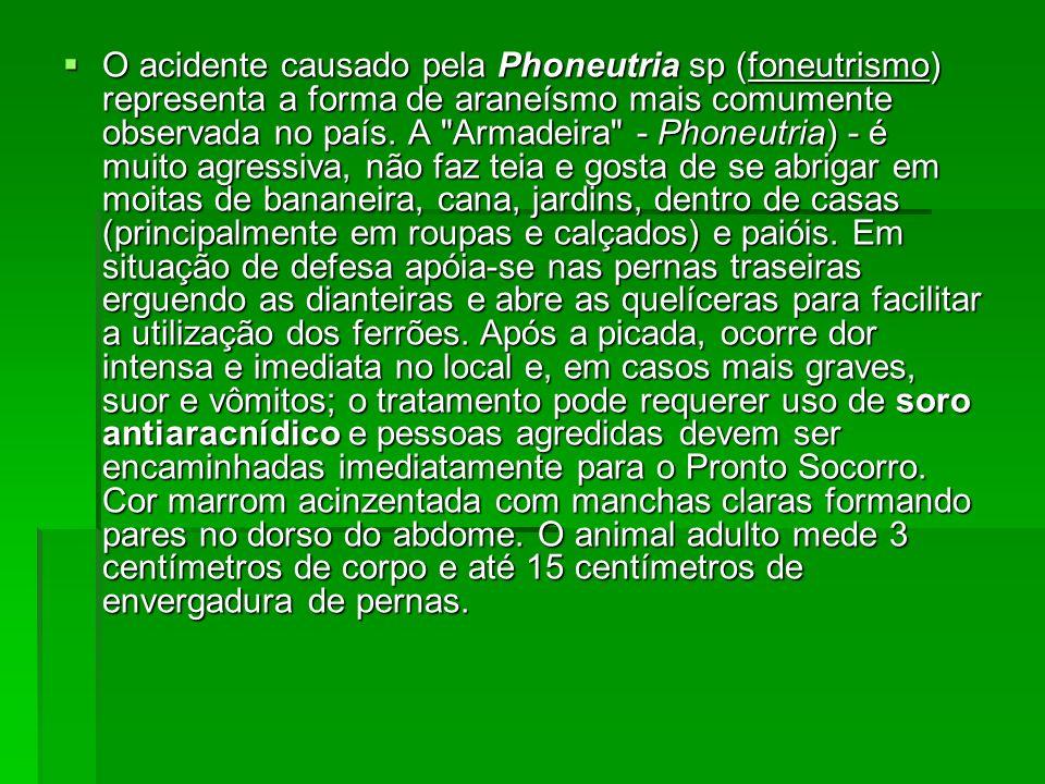 O acidente causado pela Phoneutria sp (foneutrismo) representa a forma de araneísmo mais comumente observada no país.