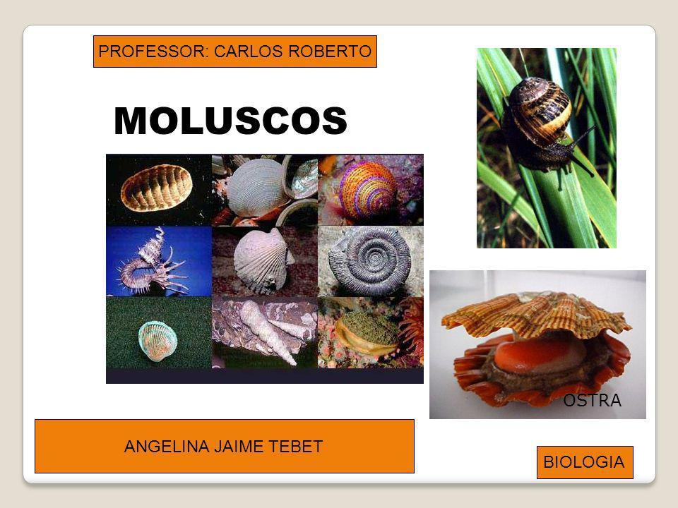 PROFESSOR: CARLOS ROBERTO