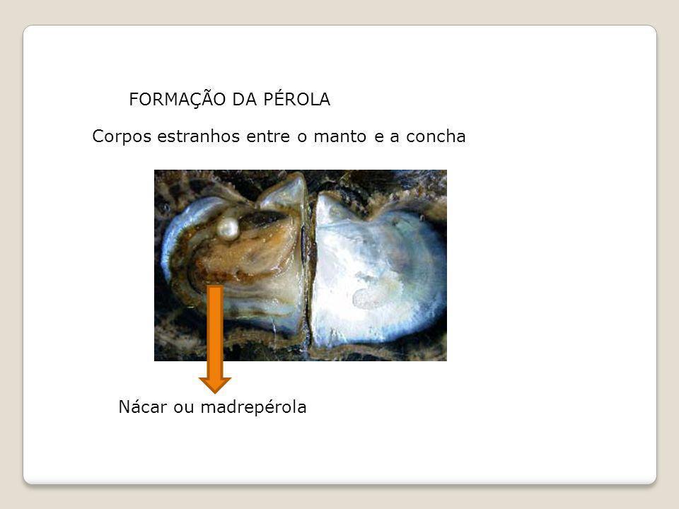FORMAÇÃO DA PÉROLA Corpos estranhos entre o manto e a concha Nácar ou madrepérola