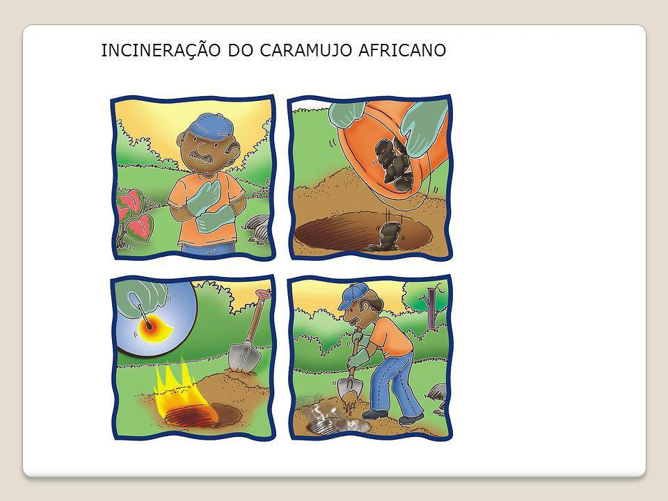 INCINERAÇÃO DO CARAMUJO AFRICANO