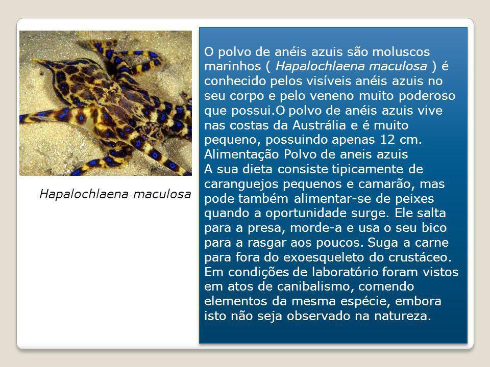 O polvo de anéis azuis são moluscos marinhos ( Hapalochlaena maculosa ) é conhecido pelos visíveis anéis azuis no seu corpo e pelo veneno muito poderoso que possui.O polvo de anéis azuis vive nas costas da Austrália e é muito pequeno, possuindo apenas 12 cm. Alimentação Polvo de aneis azuis A sua dieta consiste tipicamente de caranguejos pequenos e camarão, mas pode também alimentar-se de peixes quando a oportunidade surge. Ele salta para a presa, morde-a e usa o seu bico para a rasgar aos poucos. Suga a carne para fora do exoesqueleto do crustáceo. Em condições de laboratório foram vistos em atos de canibalismo, comendo elementos da mesma espécie, embora isto não seja observado na natureza.