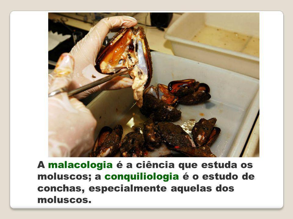 A malacologia é a ciência que estuda os moluscos; a conquiliologia é o estudo de conchas, especialmente aquelas dos moluscos.