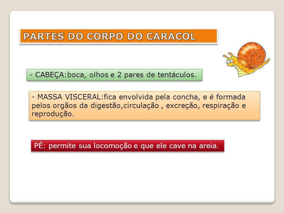 PARTES DO CORPO DO CARACOL