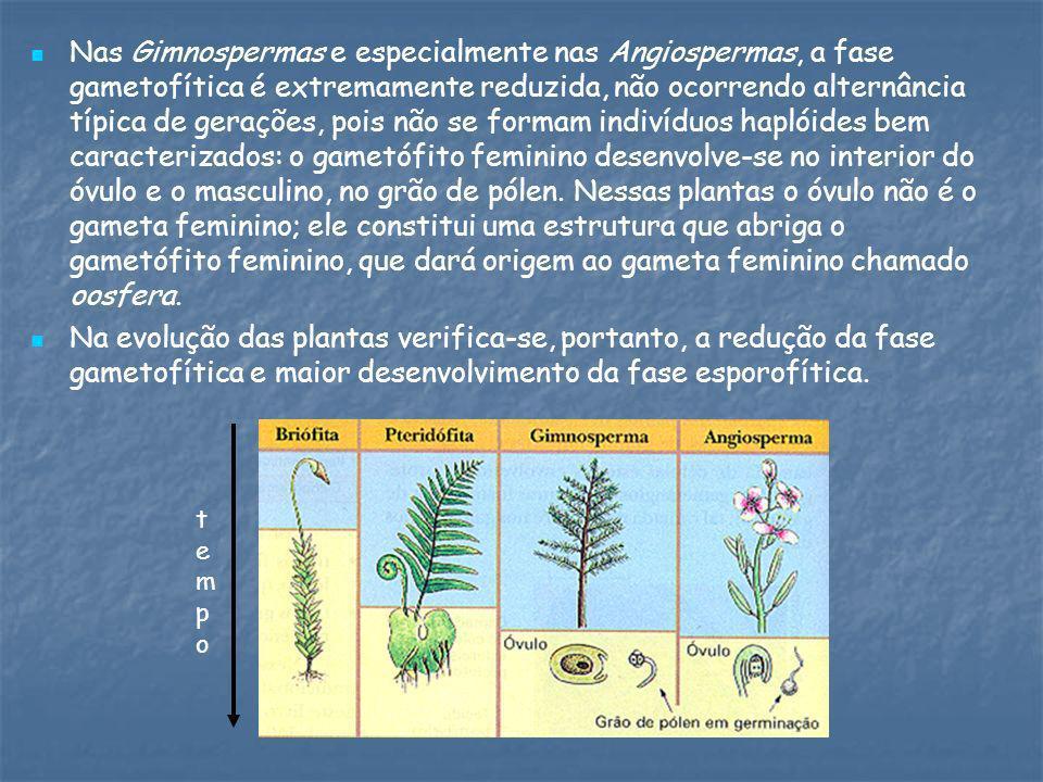 Nas Gimnospermas e especialmente nas Angiospermas, a fase gametofítica é extremamente reduzida, não ocorrendo alternância típica de gerações, pois não se formam indivíduos haplóides bem caracterizados: o gametófito feminino desenvolve-se no interior do óvulo e o masculino, no grão de pólen. Nessas plantas o óvulo não é o gameta feminino; ele constitui uma estrutura que abriga o gametófito feminino, que dará origem ao gameta feminino chamado oosfera.