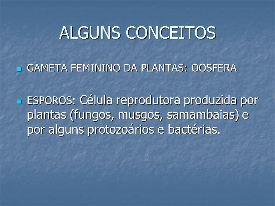 ALGUNS CONCEITOS GAMETA FEMININO DA PLANTAS: OOSFERA