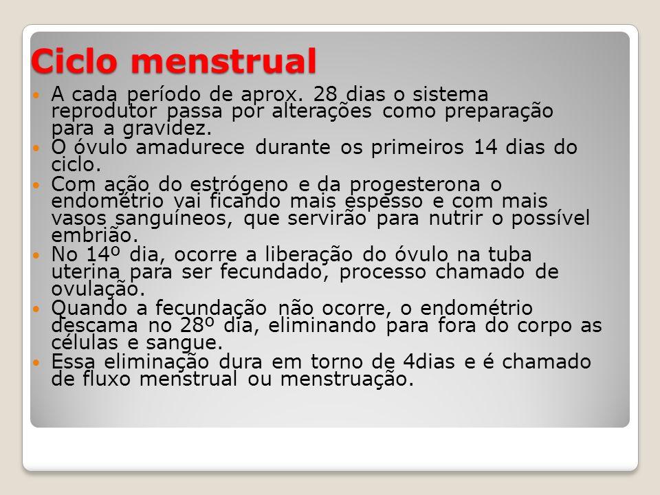 Ciclo menstrual A cada período de aprox. 28 dias o sistema reprodutor passa por alterações como preparação para a gravidez.