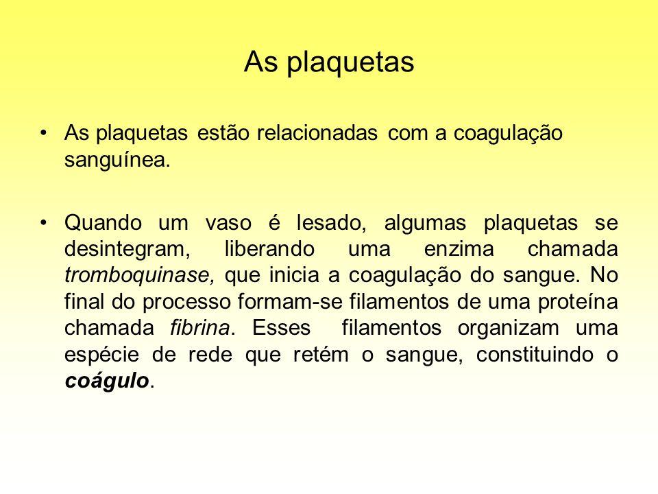 As plaquetas As plaquetas estão relacionadas com a coagulação sanguínea.