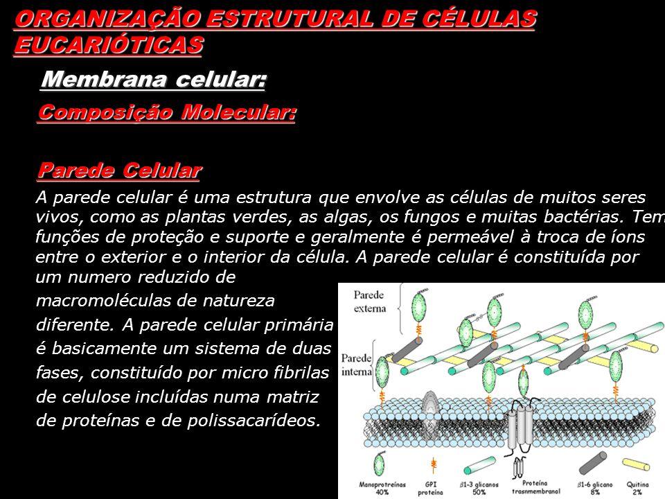 ORGANIZAÇÃO ESTRUTURAL DE CÉLULAS EUCARIÓTICAS