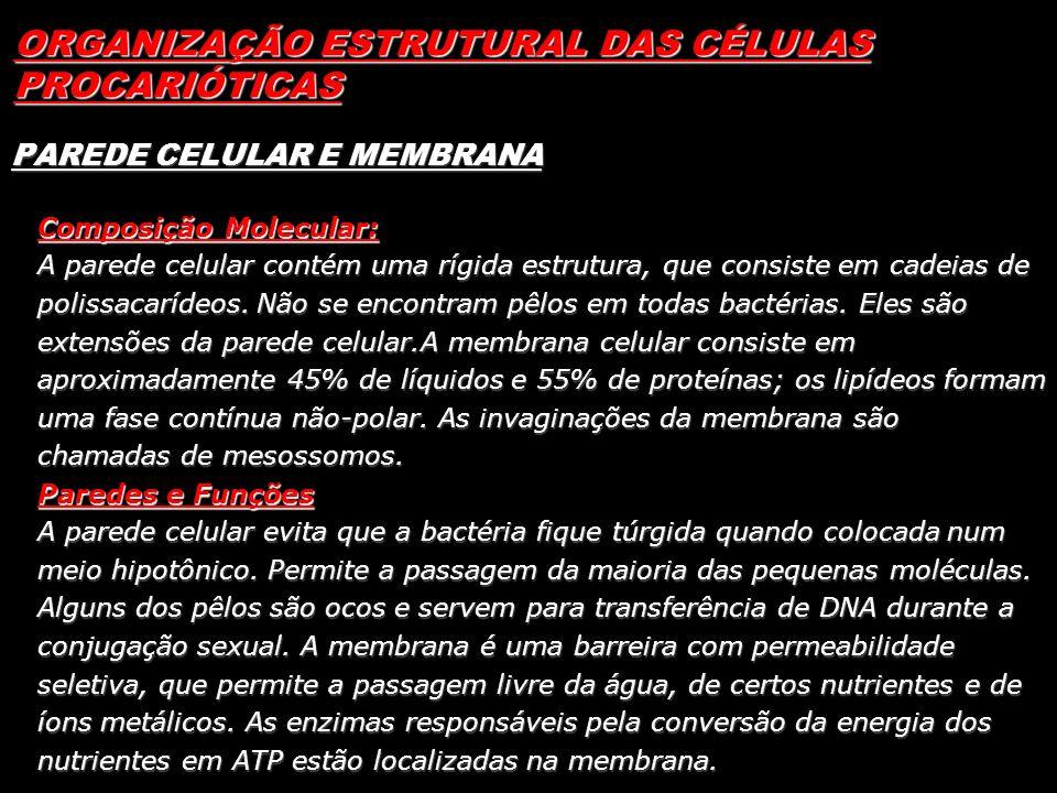 ORGANIZAÇÃO ESTRUTURAL DAS CÉLULAS PROCARIÓTICAS