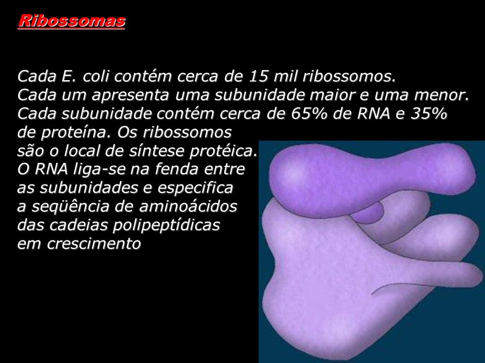 Ribossomas Cada E. coli contém cerca de 15 mil ribossomos.