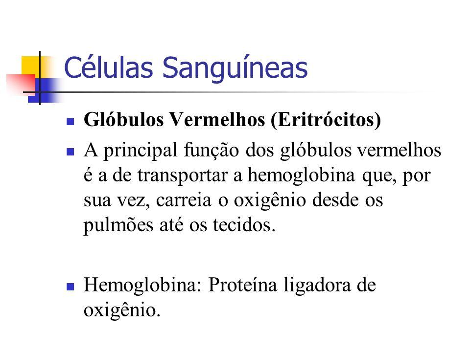 Células Sanguíneas Glóbulos Vermelhos (Eritrócitos)