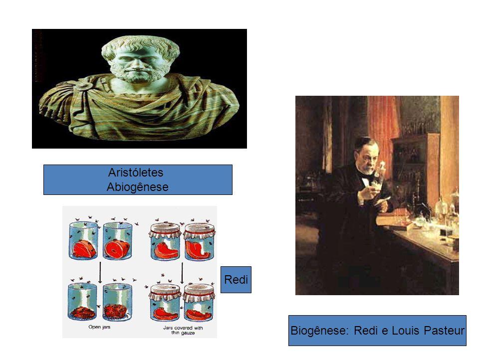 Biogênese: Redi e Louis Pasteur