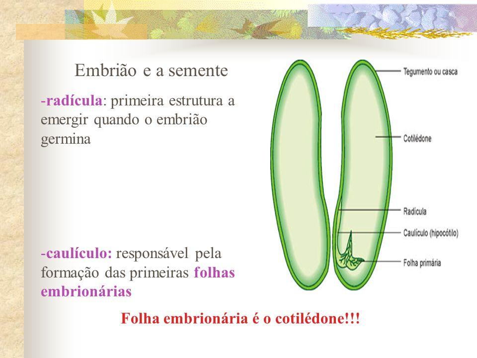 Folha embrionária é o cotilédone!!!