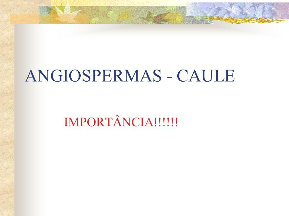 ANGIOSPERMAS - CAULE IMPORTÂNCIA!!!!!!
