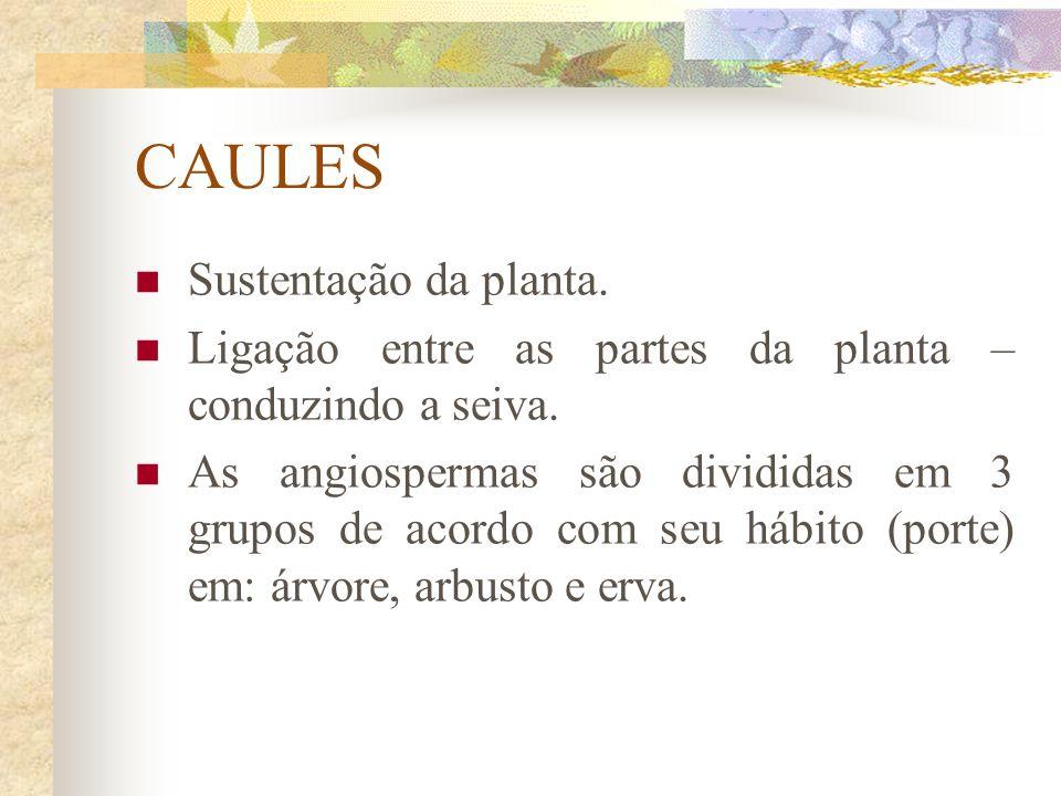 CAULES Sustentação da planta.