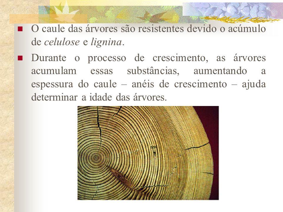O caule das árvores são resistentes devido o acúmulo de celulose e lignina.