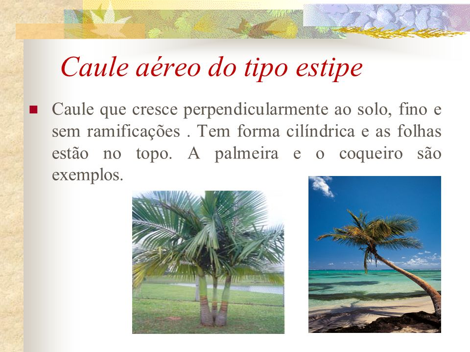 Caule aéreo do tipo estipe