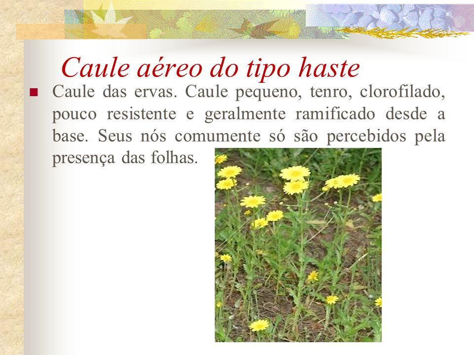 Caule aéreo do tipo haste