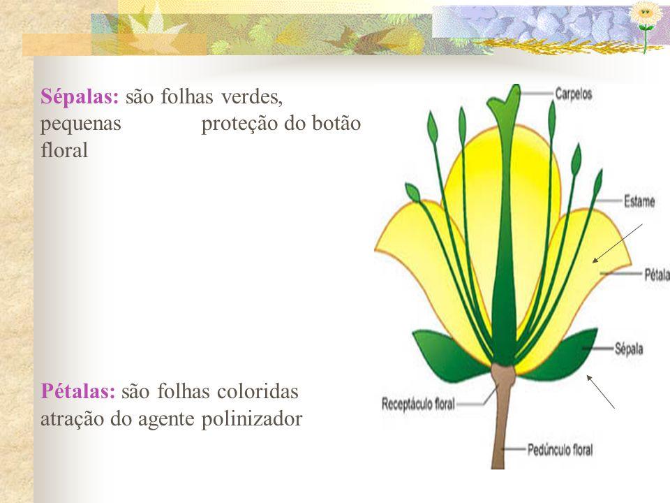 Sépalas: são folhas verdes, pequenas proteção do botão floral