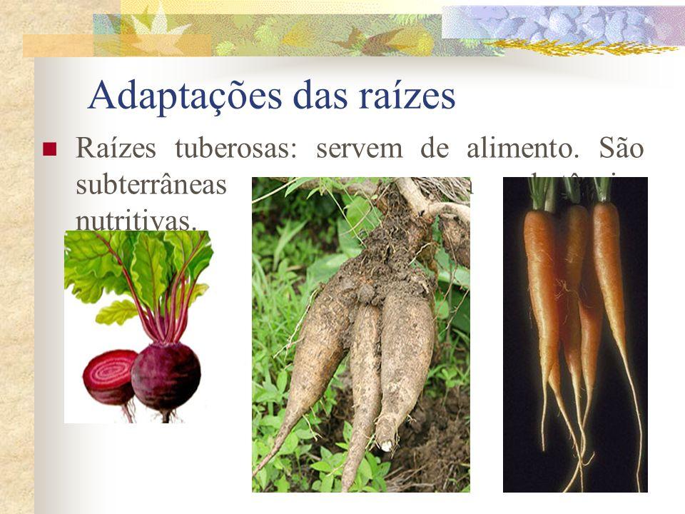 Adaptações das raízes Raízes tuberosas: servem de alimento.