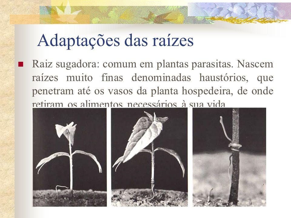 Adaptações das raízes