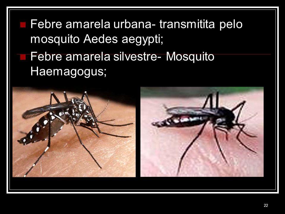 Febre amarela urbana- transmitita pelo mosquito Aedes aegypti;
