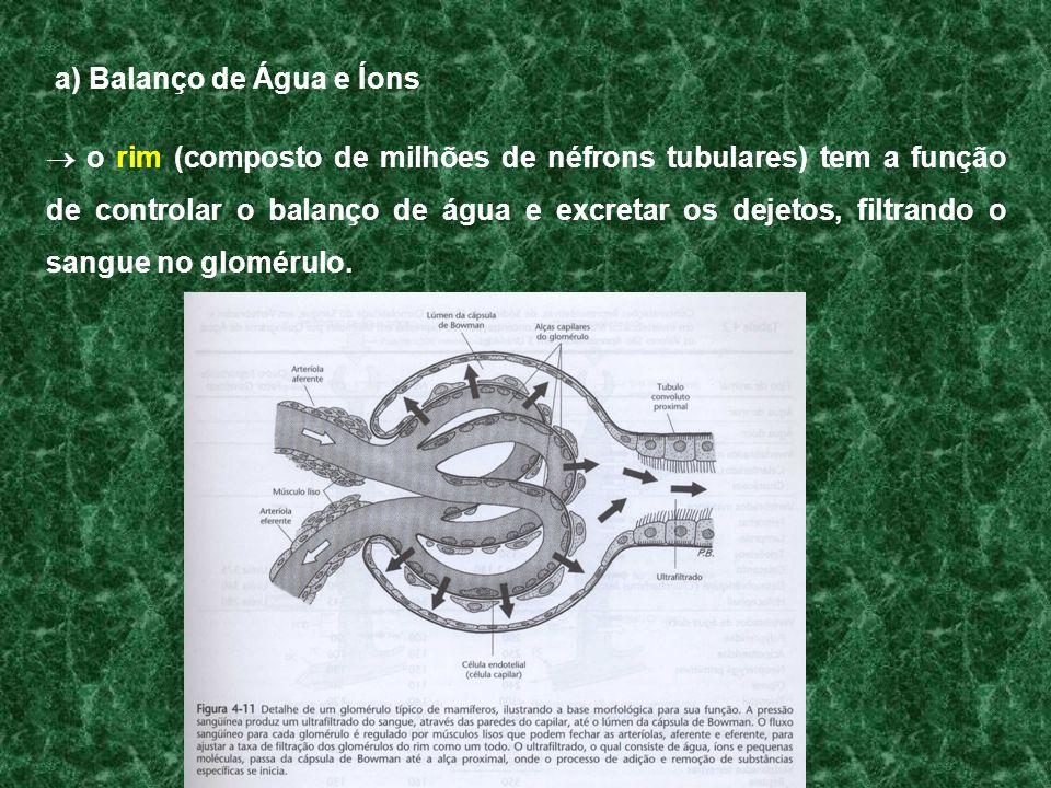 a) Balanço de Água e Íons