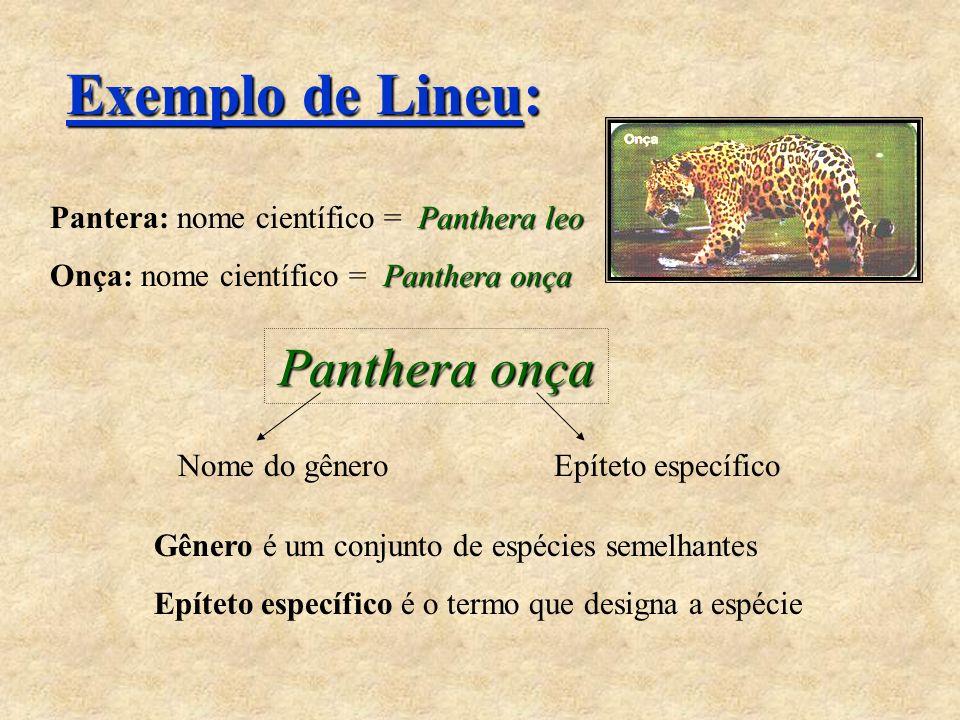 Exemplo de Lineu: Panthera onça