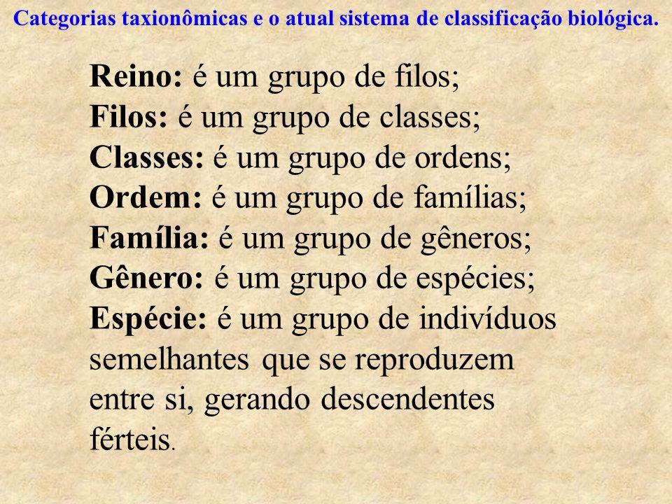 Reino: é um grupo de filos; Filos: é um grupo de classes;