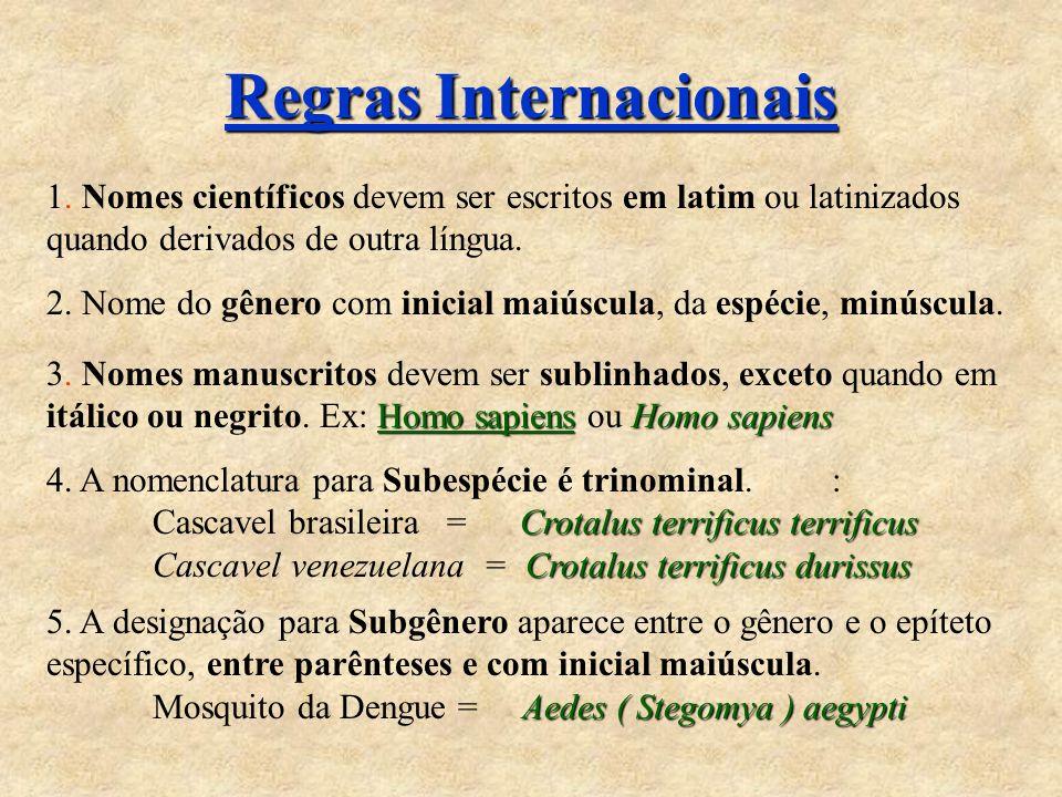Regras Internacionais
