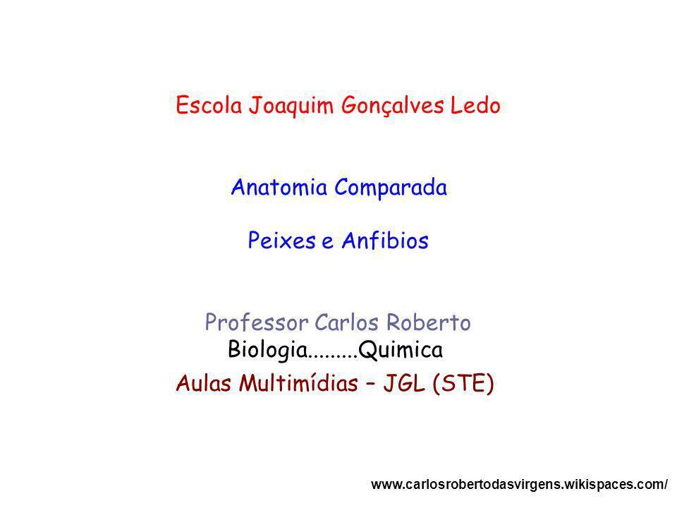 Escola Joaquim Gonçalves Ledo