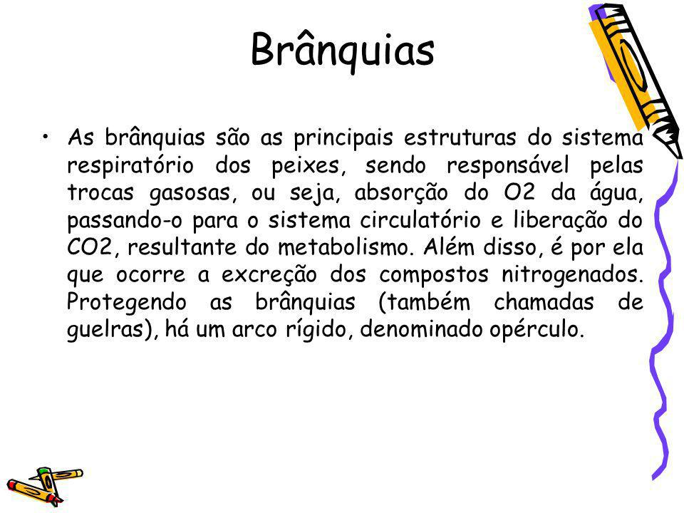 Brânquias