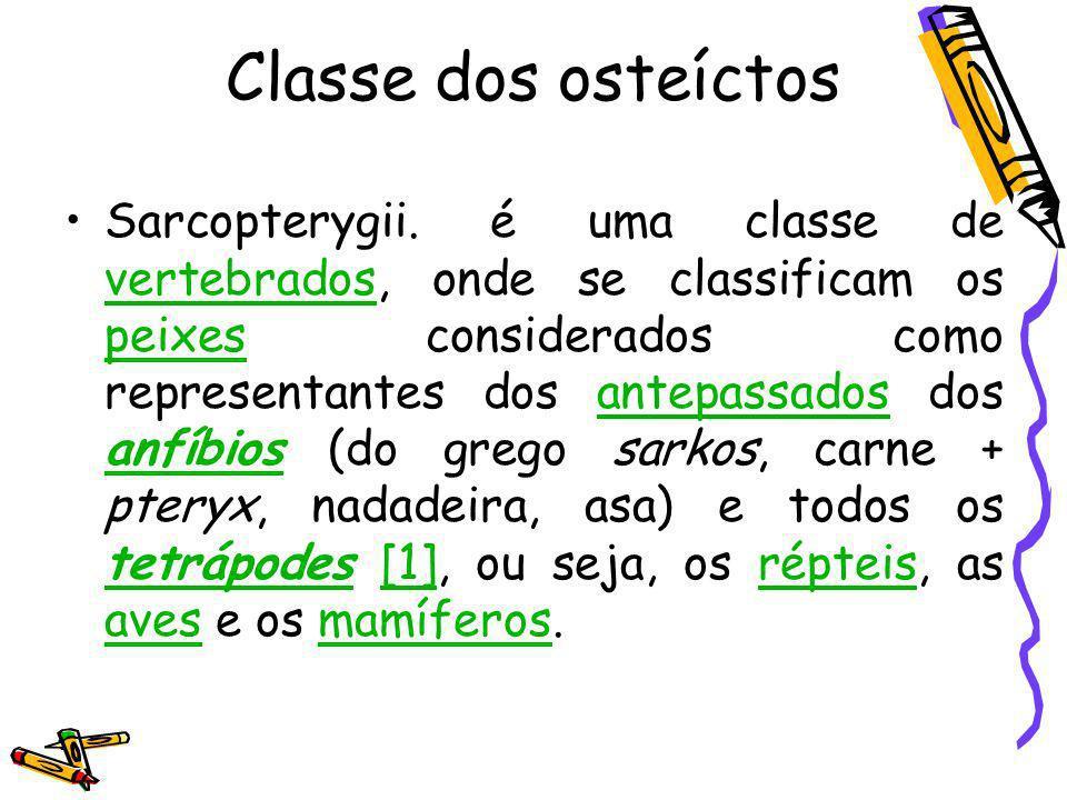 Classe dos osteíctos