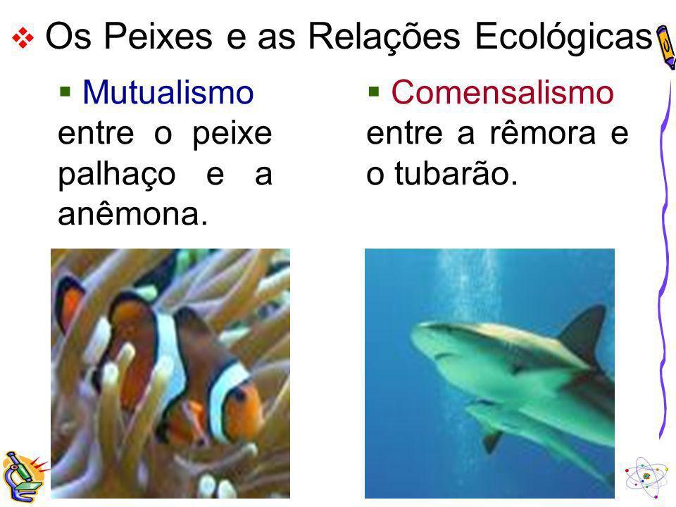 Mutualismo entre o peixe palhaço e a anêmona.