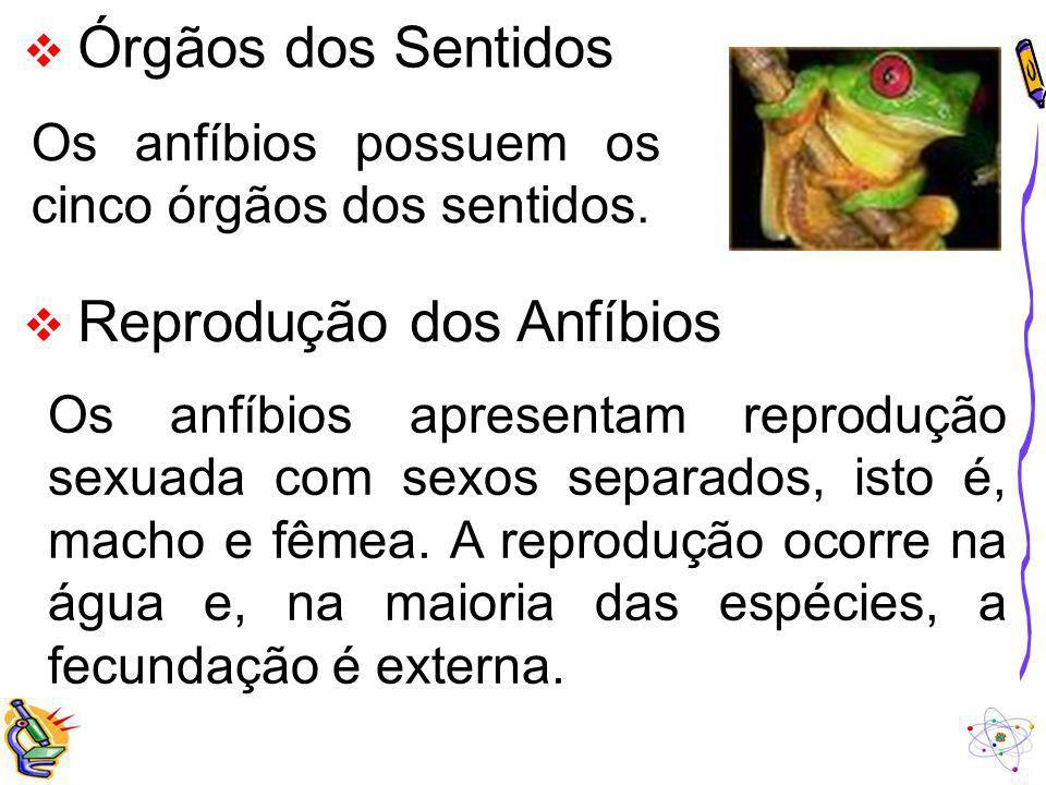 Os anfíbios possuem os cinco órgãos dos sentidos.