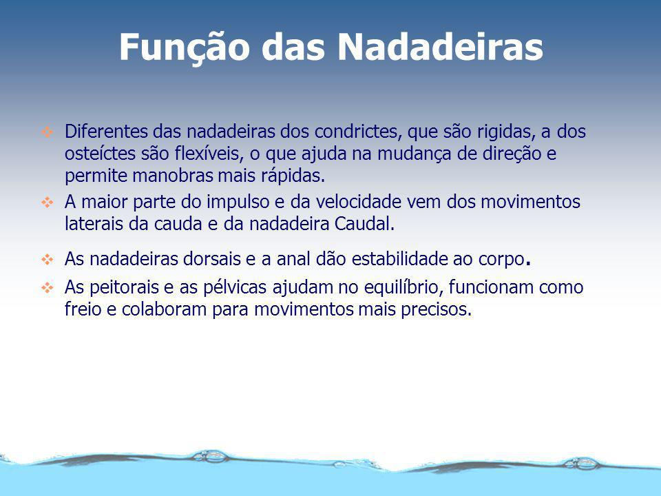 Função das Nadadeiras